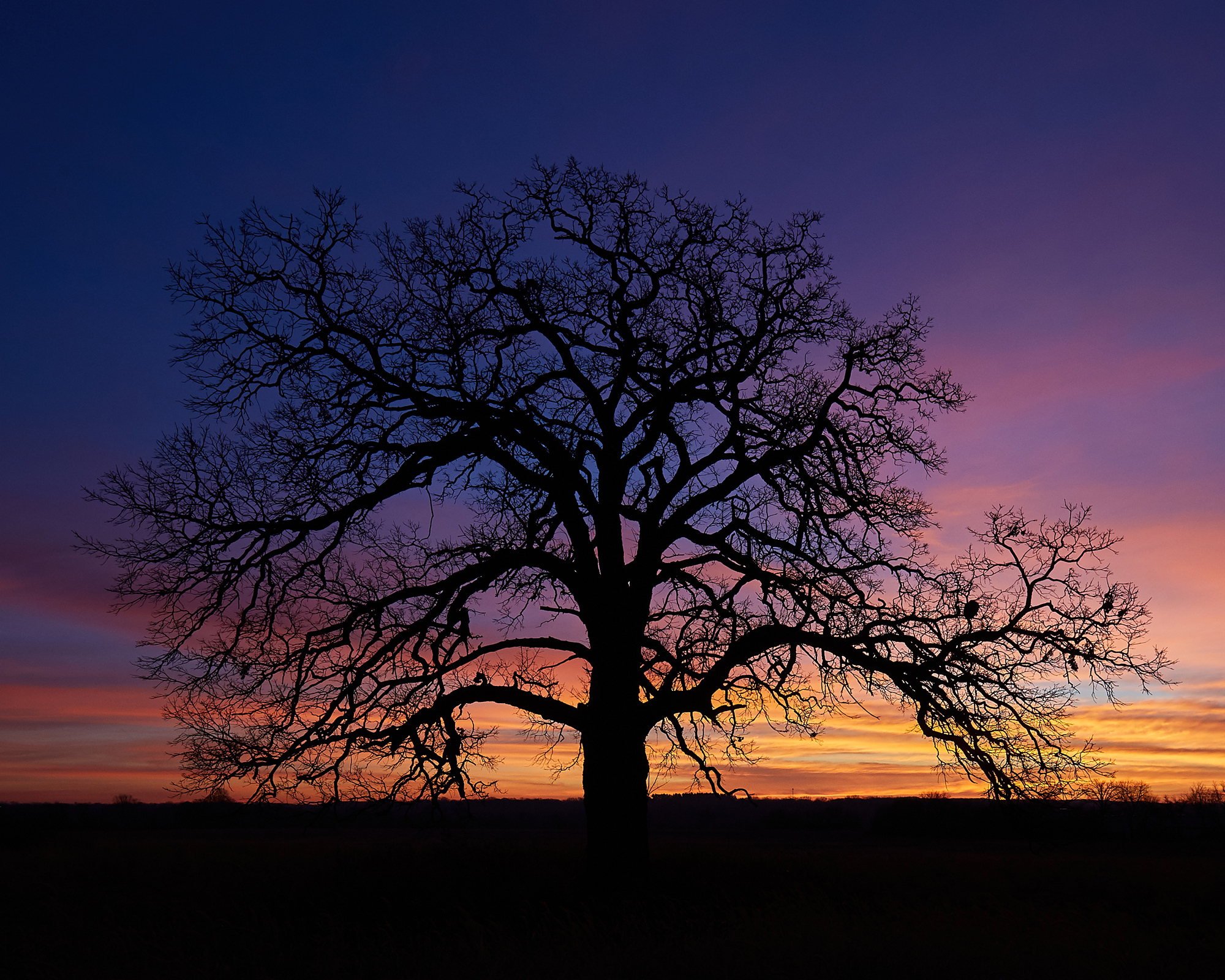Sunrise Tree, No. 2