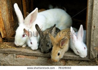 Rabbit Management, Sales And Business Plans Provider