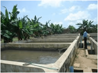 Feasibility Study For Fishery / Fish Pond / Fishery Farm Plan