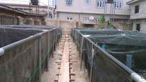 Fish Farming At Your Home
