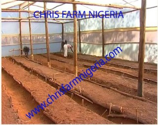 Greenhouse | Organic farm business| Business Plans |Profitable Agro Project
