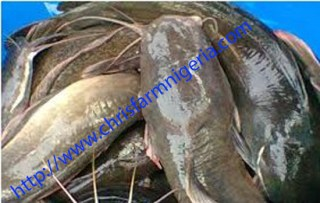 Fish Farming Made Easy Business Plans