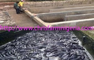 Types Of Ponds For Fish Farming