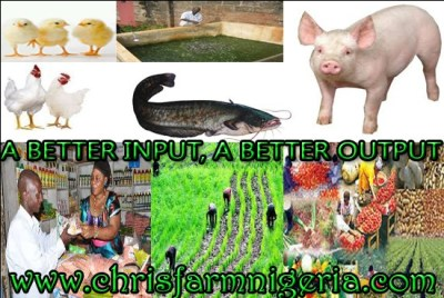 Integrated Agribusiness Business Plans / Feasibility study/ Project