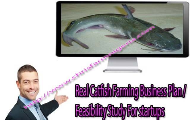 Pond for Catfish Cultural System and Management / Business Plans