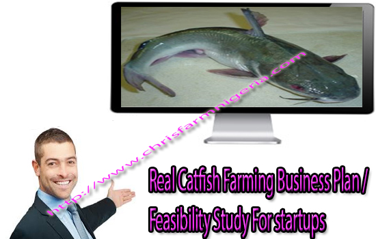 Free Consultation with Fish farming business plan in Nigeria