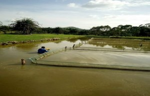 Fish Farming Basic Knowledge For Beginners