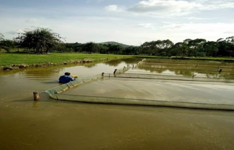 Fish Farming Cultural System and Management / Business Plans