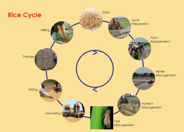Rice Farming/Processing on Business Plans and Feasibility Study Report