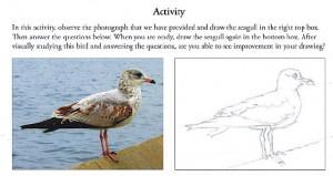 Seagull activity