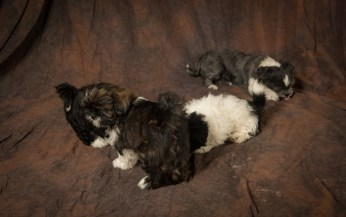 Fluff and Pups (126)