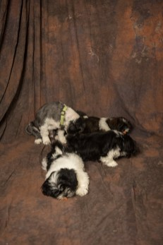 Fluff and Pups (176)