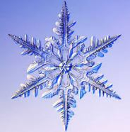 wintersingleflake