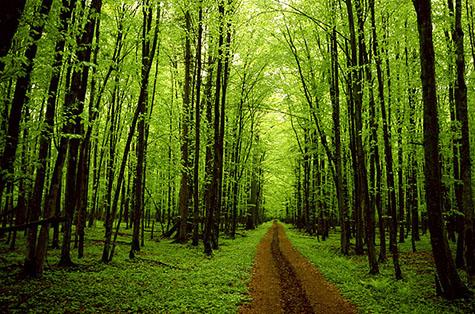 franklin_trees_01 copy