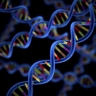 DNA HLA-B27