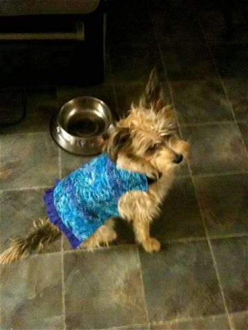 "Zoe's happy now that she has a cute little outfit... and friend Kitty gave her ""4 Paws Up"" for it via Facebook."
