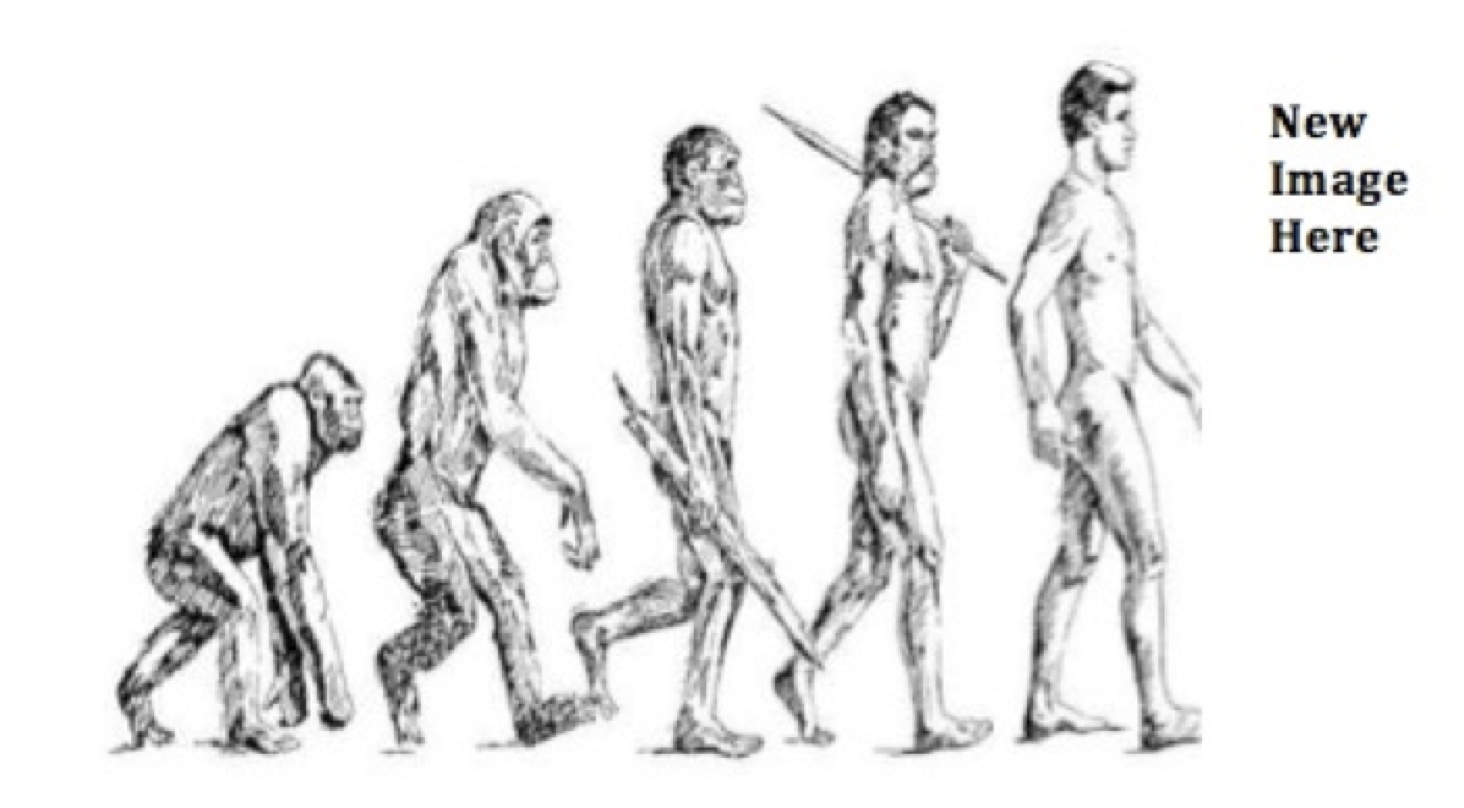 Early Man Evolution Chart