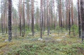 Jämsänkoski trip (30)