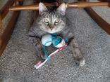 Cat showing off her toothbrush and plastic egg