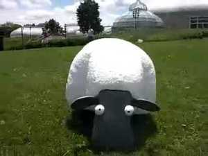Robot sheep