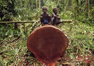 Children from the Lobi community sit on a recently felled tree. This tree was brought down as part of an eco-forestry programme. In the last ten years many foreign logging companies have moved into the Solomon Islands. The current level of official production of 830,000 cubic metres, mainly whole log exports, is running at nearly three times the sustainable level. With more than 60% of government revenue coming from tariffs on log exports, the country's economy seems locked into a spiral of resource depletion and unsustainable development.
