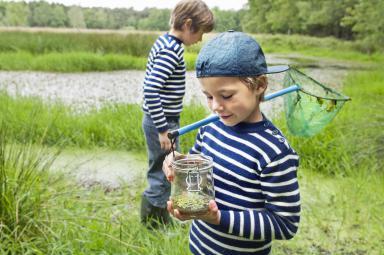 Tadpoles in a jar