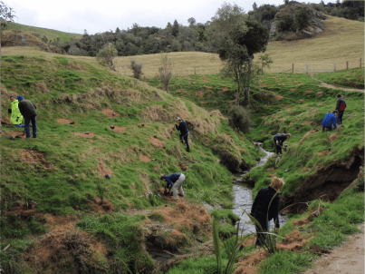 Planting dissected gully