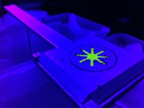Ant foraging experiment under UV light