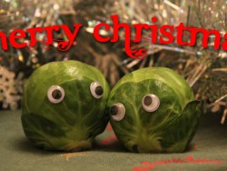 Merry Christmas Sprouts.