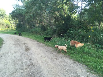 Star and her buddies hiking in Houghton