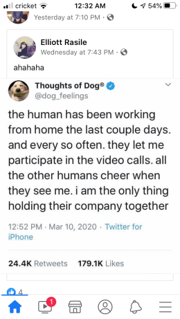 Screengrab of a Twitter message from Thoughts of Dog - The human has been working from home the last couple days. And every so often. They let me participate in the video calls. The other humans cheer when they see me. I am the only thing holding their company together