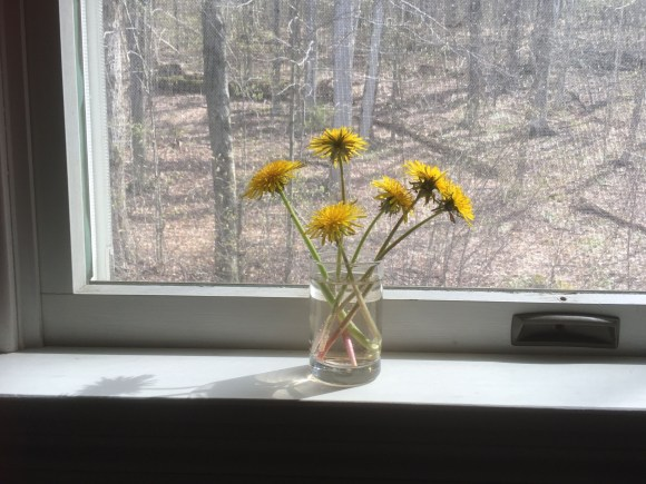 Dandelions on the windowsill