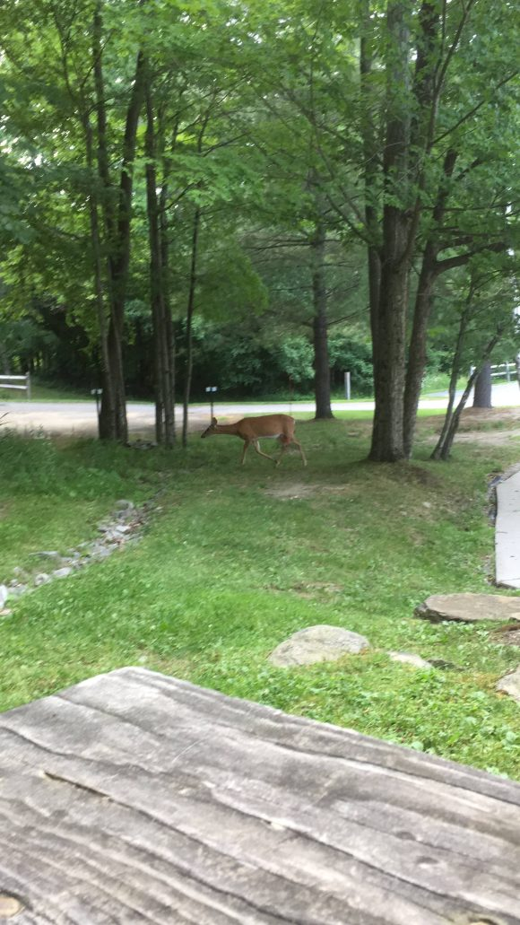Deer walking near me.