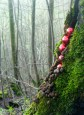 Baubles in the wood