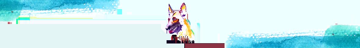 dog training, dog trainer, antigua
