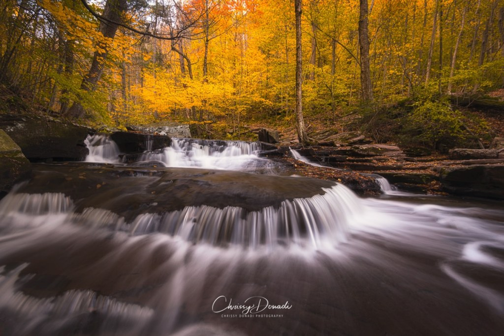 Autumn water cascades with golden trees