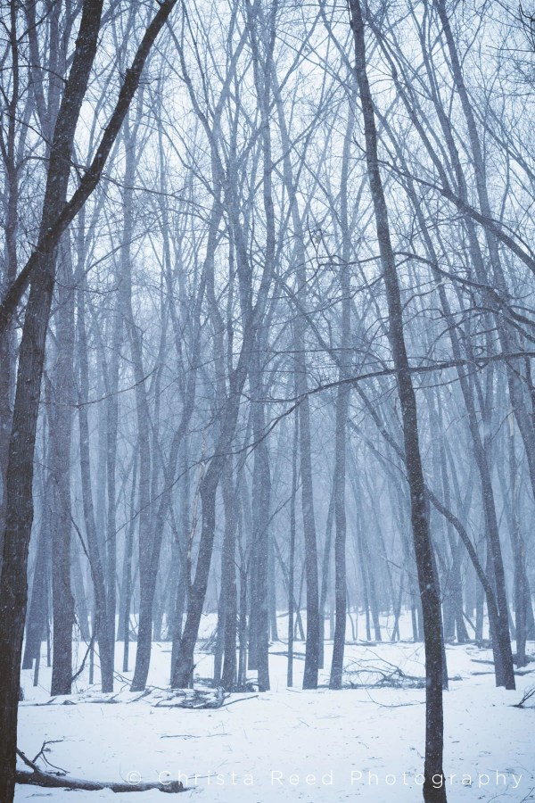 snow falling in the trees at the Minnesota river valley