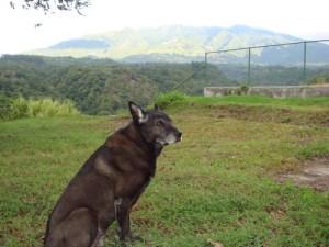 Christa Wojo's dog Roscoe at Volcan Baru