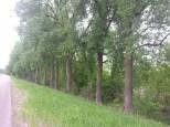 Around Belle Plaine MN Teien (19)