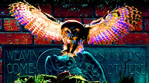 Owl Symbolism In The Occult Attributes of Demons Occult Unmasked