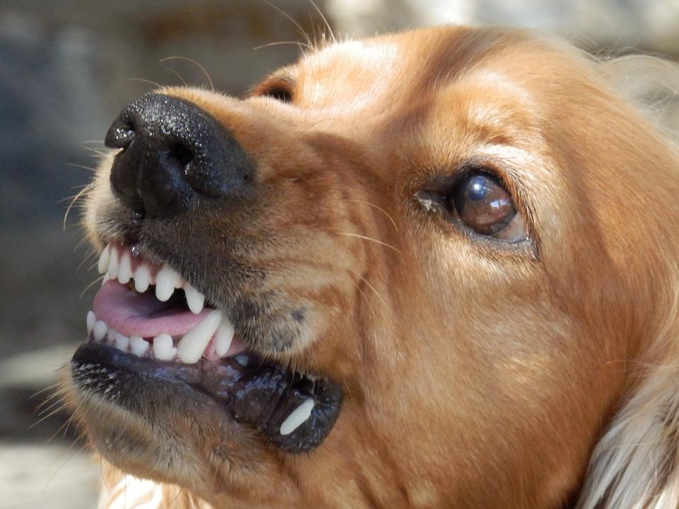 Utah Dog Bite Statistics | Dog Attack Lawyer in Orem Ut