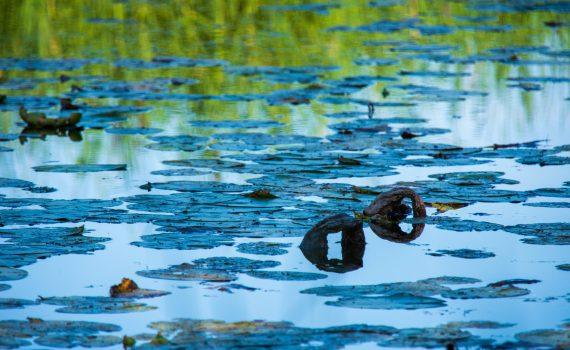 Säbysjöns vattenyta