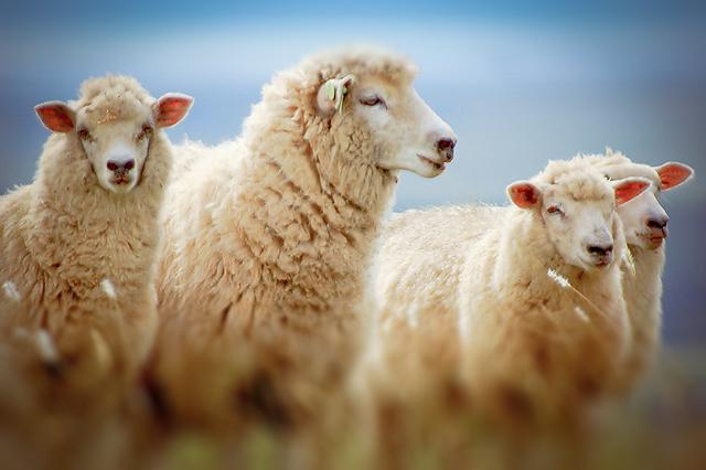 If You Love Me Feed My Sheep