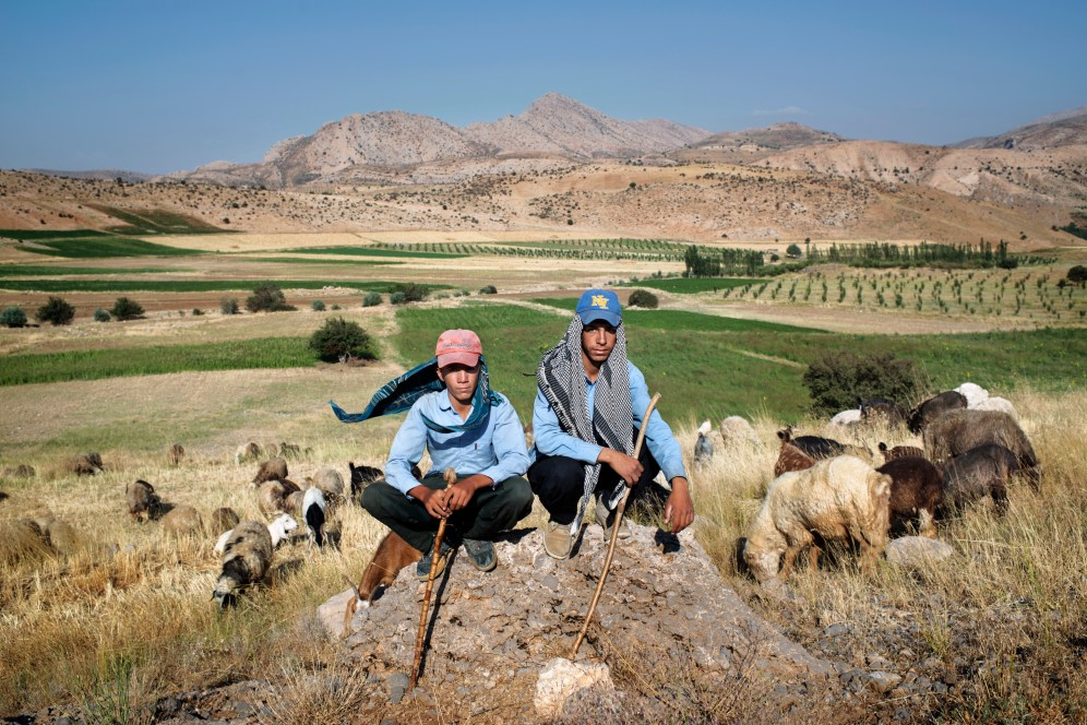 Two brothers herding goats in Southern Iran