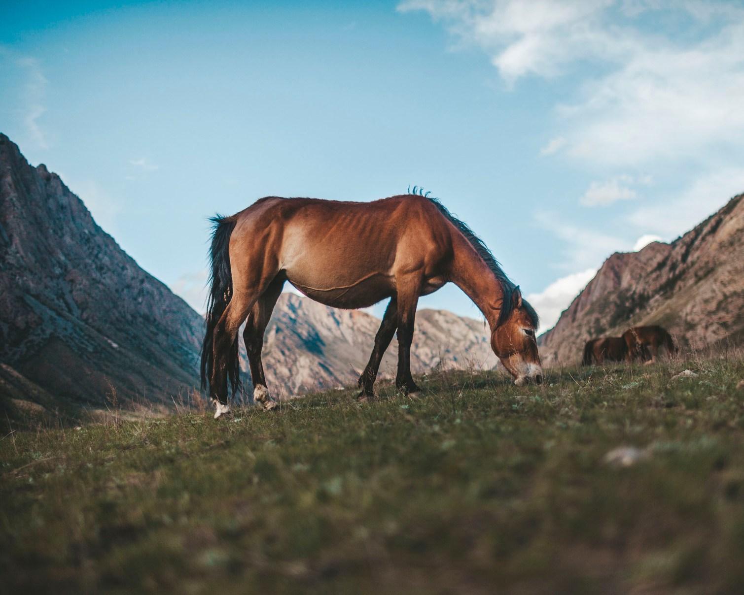Kyrgyzstan2018_003