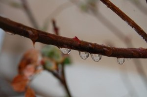 Nature - stem with water drops.