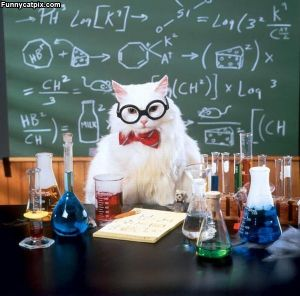 Professor_Cat