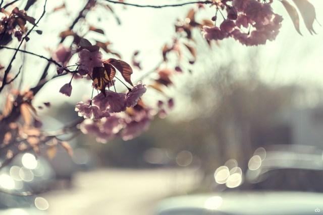 Flowers - Bokeh   Fujifilm   X-T1   Helios 44-2