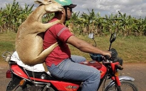 We're Not Kidding About Motor Cycle Insurance