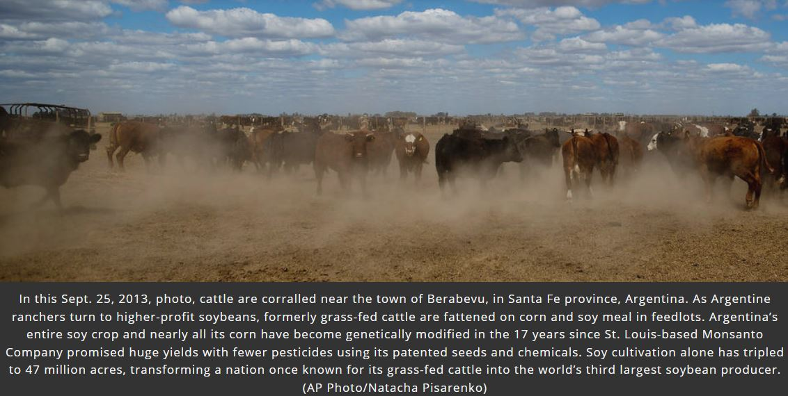 cattle ranching Argentina